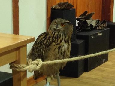 Big owl = friendly and strokey